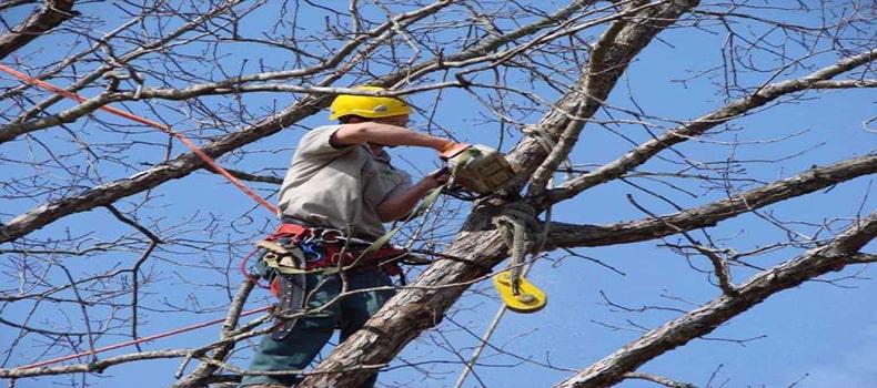 بهتر است قبل از عملیات درختانی که ممکن است خطر ساز باشند را حذف کنید